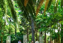 New Venue - Private Island Wedding in Dubrovnik, Croatia / This gorgeous private island is a natural reserve located just 10 minutes away by boat from Dubrovnik's old town port. We have two ceremony options here, a tranquil garden or an old monastery.