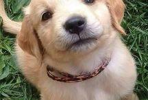 Doggo Love