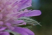 Flowers. Blomster