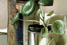 plants / zielone stwory