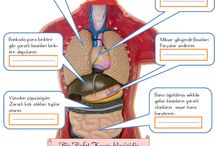 organlar