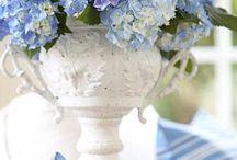 Flowers / by Meredith Monrad