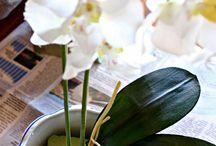dekorácie orchidea