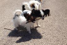 Nuestras mascotas de junio de 2014 / Selección de mascotas fotografiadas que visitaron nuestro centro durante junio de 2014. ¿Viniste con tu mascota? Mándanos su foto!