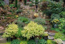 Garden plant Ideas / by Courtney Jewell