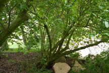 Alles wieder grün 06 | 15 / www.kirchhoff.net