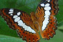 Motýli - Butterflys / Motýli - Butterflys