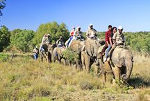 Adventures With Elephants / Adventures With Elephants provide true value for money hands-on Elephant Interactions, Elephant-back Safaris, Swims on the Elephants, Starlight Safaris as well as Tailor-made Activities such as weddings, teambuilding, corporate functions and filming.