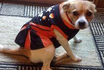 Dog Costumes / Because.