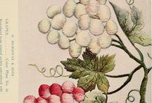 ricamo uva