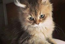 cute little kitty's