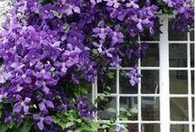 Gradina flori