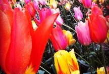 Colour Beauties