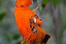 Feathered Friends / by Karin B