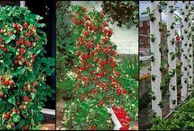 Vertikálne pestovanie jahôd