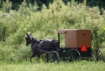Amish / Having lived around the Amish for so many years, I grown to love them and respect them! / by Carol Lambirth