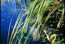na hladině rybníka