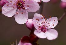 flores e paisagens