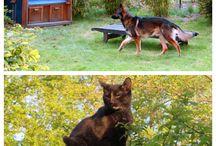 Tiere / Vierbeiner aller Art, vor allem Lil' Maunz Beatles und Sir Henry, die Samtpfoten