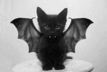 Meow, meow / by Melanie Fuchs