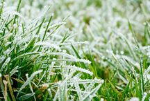 Landscaping Topics This Fall – Proposition 6 and Winterizing Your Lawn / Winter is a very important time for your lawn. Ask us about winterizing your lawn to avoid diseases, bald patches, and weeds that will pop up in the spring.