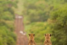Got to love Africa