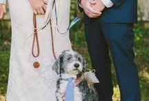 | Wedding pets |