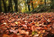 Nature - Bretagne / Parc des Gayeulles Rennes France Décembre 2013