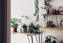 Interior Greenery