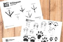 Wildlife footprints and wildlife tracks / Footprints made by animals and wildlife in the garden