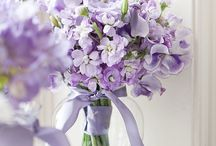 Colors: Purple & Lavender