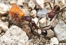 Wildlife: Invertebrates