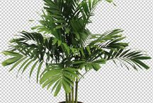 PNG Plants