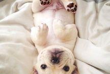 Love...puppy..