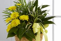Flowers and Plants Corporate Gifts / Call 2129218150 to order these bouquets. Or send them the Perfect gift for New Year, birthday or to celebrate any special occasion any time through this time of year. Also, you can stop by our store front at 1020 Avenue Of The Americas, New York, NY 10018 Or order online 24/7 at http://www.americasfloristnyc.com/ Americas Florist NYC delivers flowers worldwide. #samedayflowers #nycflorist #nycflowerdelivery #fashiondistrict #Americasflorist #flowers #flowerdeliveryNYC