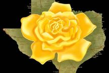 TEXAS the yellow rose