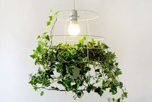 DIY -  Plants and Outdoor Crafts / by Jeri Whitehorn Rtwr