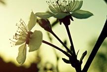 Beauty of God's Creation / by Brittany Biram