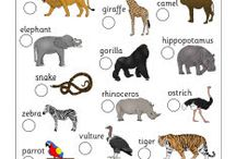 Homeschool:  Zoology