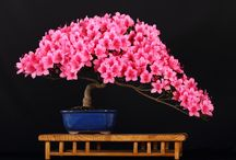 Bonsai / by Karen Greenstadt