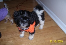 Our Pets / I love our animals, my pup is Roxy she was supposed to be a small 6lbs Morkie but is now more a Shitzue mix of 19 lbs :)
