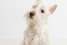 pets photography / Pet photography inspiration