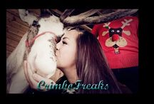 CrimboFreaks Collection 2014