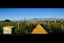 Lyrarakis Vineyards & Facilities / Our vineyards, bottling facility and winery in Crete www.lyrarakis.com