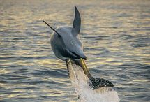 *through a dolphin's eyes*