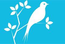 News about birds