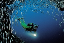 Best of the Maldives / Stunning atolls, thrilling drift dives and exceptional marine life encounters ensure the Maldives place as one of the world's finest scuba diving holiday destinations.