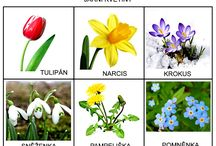 jar 1 -prve jarne kvetinky
