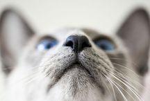 Here Kitty Kitty Kitty / by Christine K
