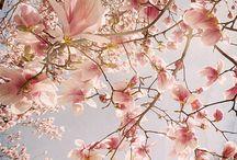 Magnolias / by Eve Hogue